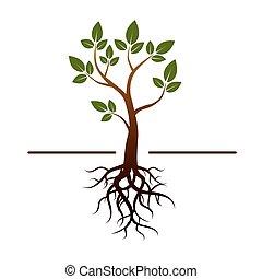 vetorial, árvore, verde, folheia, e, raizes