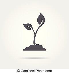 vetorial, ícone, semente, seedling, ilustração, silhouette., processo