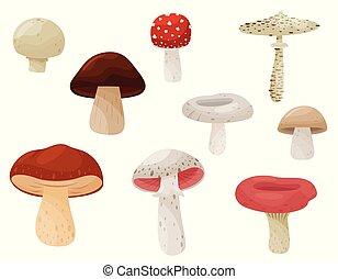 vetorial, apartamento, jogo, natural, comestível, plant., cartaz, venenoso, mushrooms., livro, floresta, fungi., product., ou, elementos
