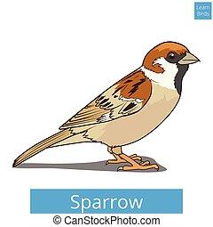 vetorial, aprender, educacional, pardal, pássaros, jogo