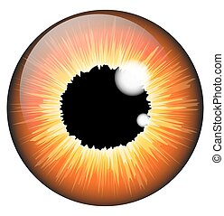 vetorial, aveleira, olho, fundo, isolado, jogo, laranja, branca, realístico, desenho, íris