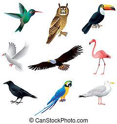 vetorial, branca, jogo, isolado, pássaros