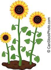 vetorial, caricatura, de, jardim, girassóis, crescer, em, solo