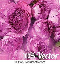 vetorial, cartão, com, peony, roses., casório, saudação, ou,...