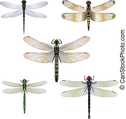 vetorial, cinco, libélulas