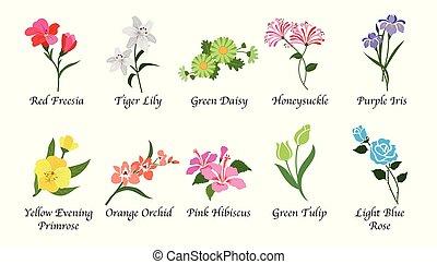 vetorial, cobrança, botanica, isolado, orgânica, natureza, ...
