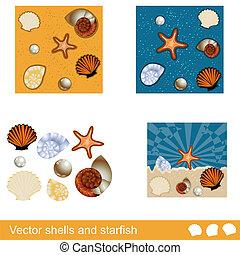 vetorial, conchas, e, starfish