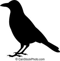 vetorial, corvo