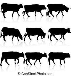vetorial, cow., pretas, silhuetas, cobrança, illustration.