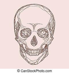 vetorial, crânio humano
