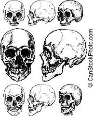 vetorial, cranio