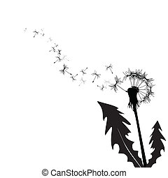 vetorial, dandelion