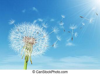 vetorial, dandelion, voando, céu, nublado, sementes