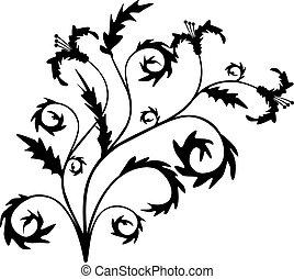 vetorial, decoração, scroll, ilustração, cartouche