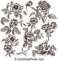 vetorial, desenhado, flores, mão, rosa