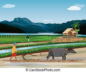 vetorial, desenho, agricultor, paddy, arado, campo