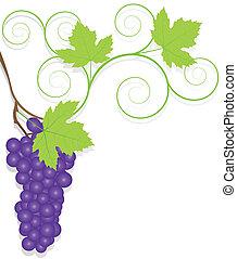 vetorial, ecologia, uva, fundo