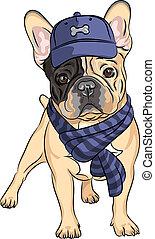 vetorial, engraçado, caricatura, hipster, cão, buldogue francês, raça