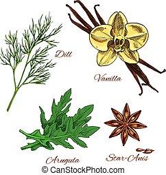 vetorial, esboço, aroma, temperos, e, ervas, vestindo