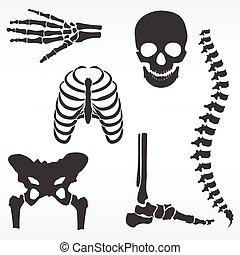 vetorial, esqueleto humano