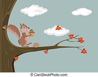 vetorial, esquilo, ilustração