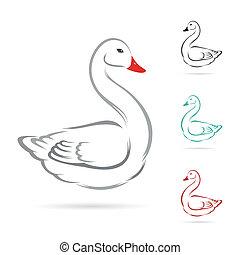 vetorial, experiência., imagem, cisne, branca