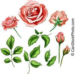 vetorial, flor, rosa, folhas, caule, realístico, jogo