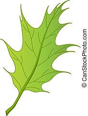 vetorial, folha carvalho, ibérica
