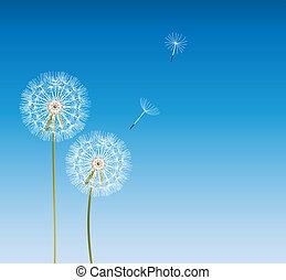 vetorial, fundo, abstratos, ilustração, dandelion