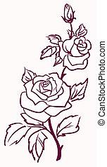 vetorial, fundo, três, isolado, rosas, stylized, luz, pálido...