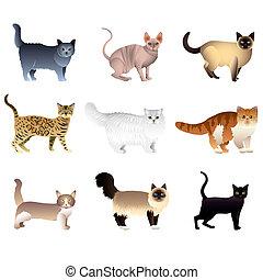 vetorial, gatos, branca, jogo, isolado