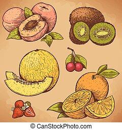 vetorial, gravura, frutas, e, bagas