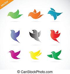 vetorial, grupo, de, coloridos, pássaro