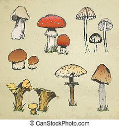 vetorial, hand-drawn, cogumelos