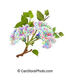 vetorial, hibisco, fundo, multi, branca, colorido, ramo