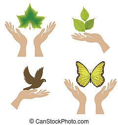 vetorial, icons., ilustração, natureza