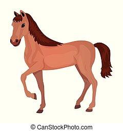 vetorial, illustration., caricatura, experiência., cute, cavalo branco, isolado