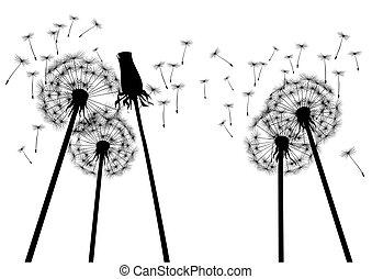 vetorial, ilustração, dandelions.