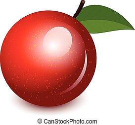vetorial, ilustração, de, brilhante, maçã