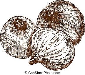 vetorial, ilustração, de, três, cebola