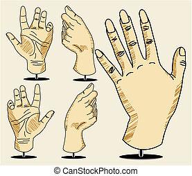 vetorial, ilustração, mão