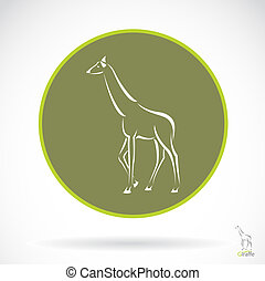 vetorial, imagem, de, um, girafa