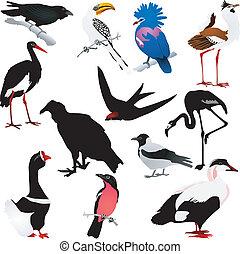 vetorial, imagens, de, pássaros