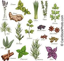 vetorial, isolado, ícones, de, natural, temperos, e, ervas