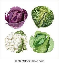 vetorial, jogo, vegetables., couve flor, aquarela, repolho savoy