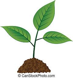 vetorial, jovem, árvore