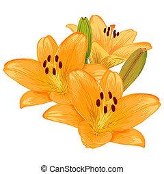 vetorial, lilies.