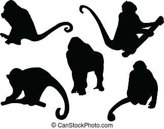 vetorial, -, macaco