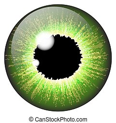 vetorial, olho, fundo, isolado, jogo, branca, realístico, verde, desenho, íris