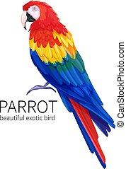 vetorial, pássaro, papagaio
